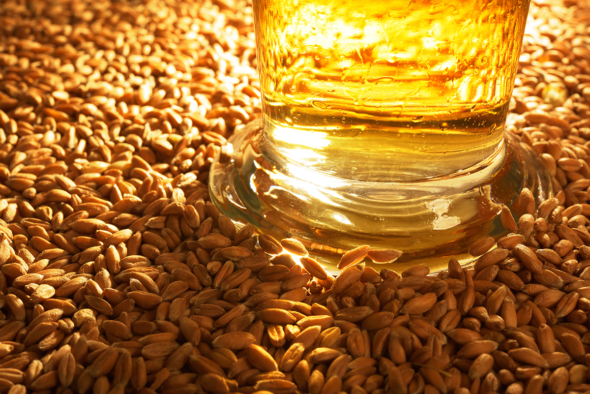 macro view of a beer glass with wheat, grain, barley, malt